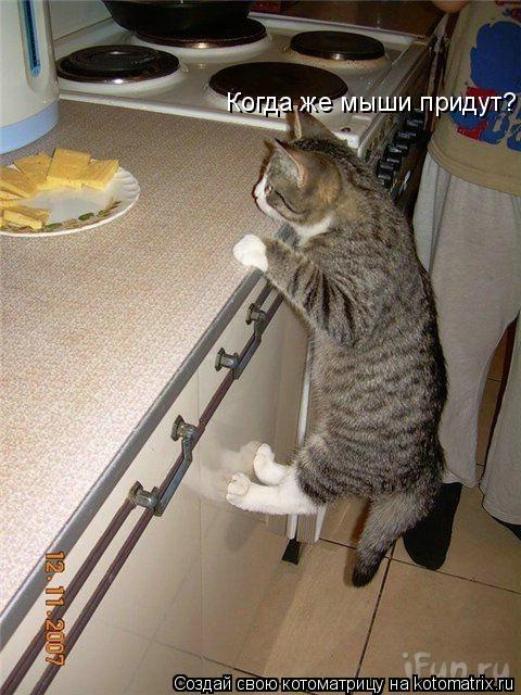 Котоматрица: Когда же мыши придут?