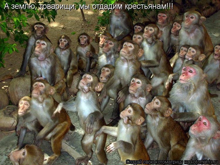 Котоматрица: А землю, товарищи, мы отдадим крестьянам!!!