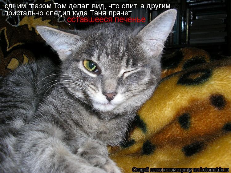 Котоматрица: одним глазом Том делал вид, что спит, а другим  пристально следил куда Таня прячет оставшееся печенье