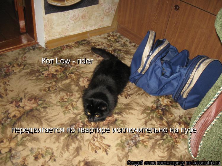 Котоматрица: Кот Low - rider Кот Low - rider передвигается по квартире исключительно на пузе