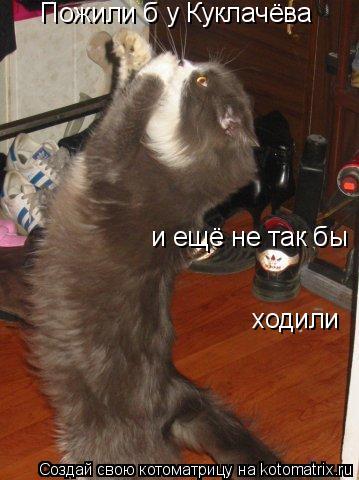 Котоматрица: Пожили б у Куклачёва  и ещё не так бы ходили