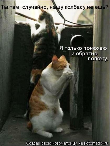 Котоматрица: Ты там, случайно, нашу колбасу не ешь? Я только понюхаю и обратно положу.