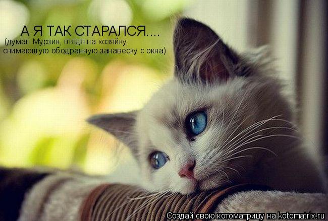 Котоматрица: А Я ТАК СТАРАЛСЯ.... (думал Мурзик, глядя на хозяйку,  снимающую ободранную занавеску с окна)