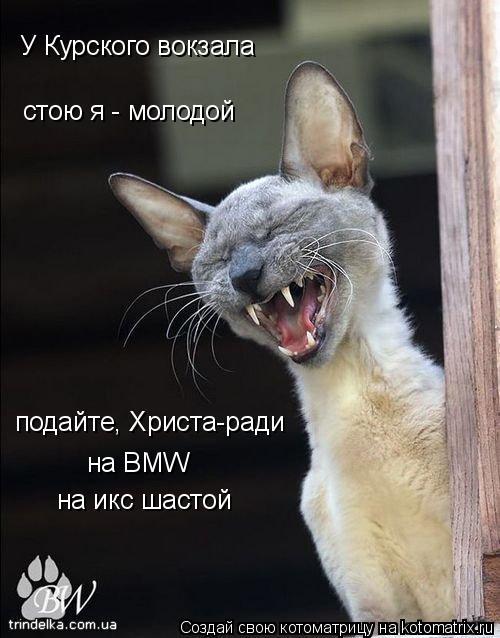 Котоматрица: У Курского вокзала стою я - молодой подайте, Христа-ради на BMW  на икс шастой