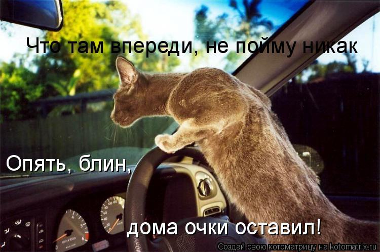 Котоматрица: Что там впереди, не пойму никак Опять, блин,  дома очки оставил!
