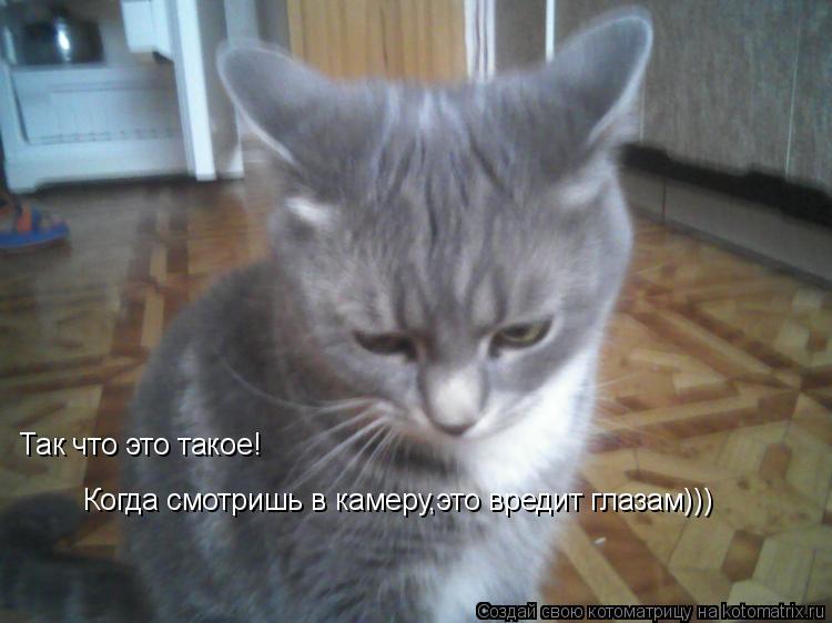 Котоматрица: Когда смотришь в камеру,это вредит глазам))) Так что это такое!