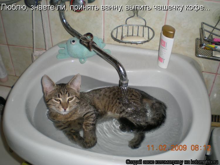 Котоматрица: Люблю, знаете ли, принять ванну, выпить чашечку кофе...