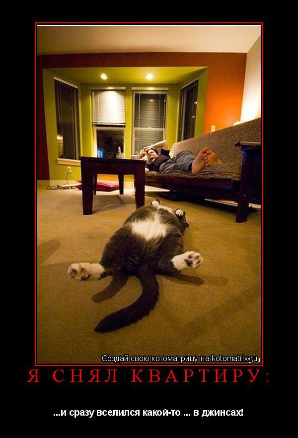 Котоматрица: Я снял квартиру: ...и сразу вселился какой-то ... в джинсах!