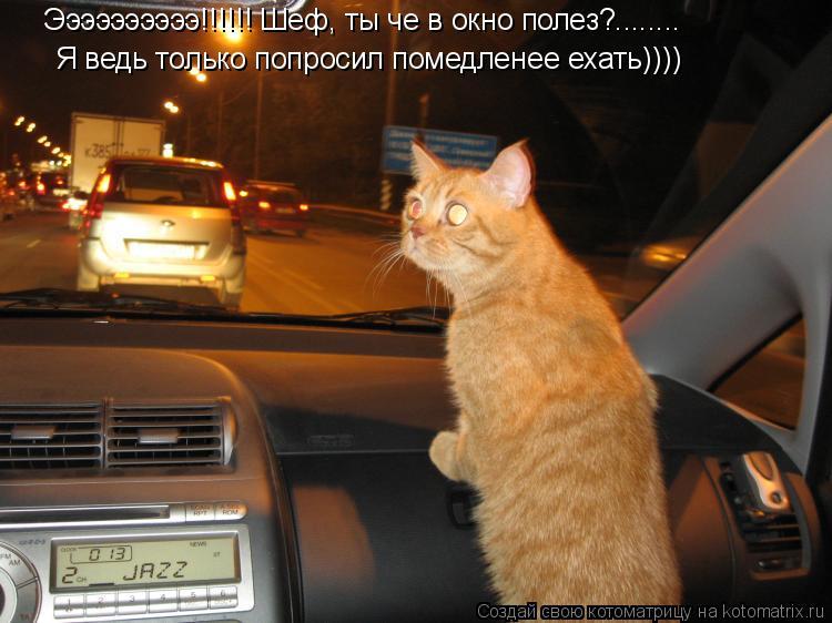 Котоматрица: Ээээээээээ!!!!!! Шеф, ты че в окно полез?........ Я ведь только попросил помедленее ехать))))