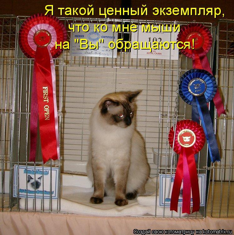 """Котоматрица: Я такой ценный экземпляр, что ко мне мыши на """"Вы"""" обращаются!"""