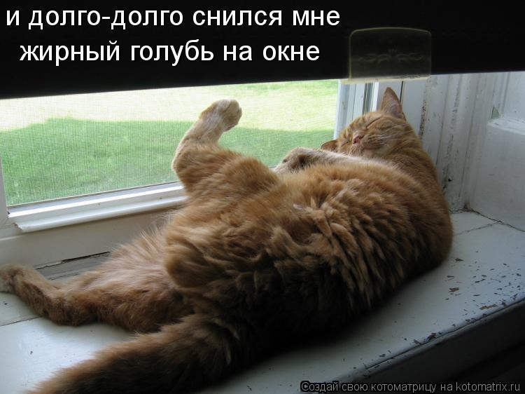 Котоматрица: и долго-долго снился мне жирный голубь на окне