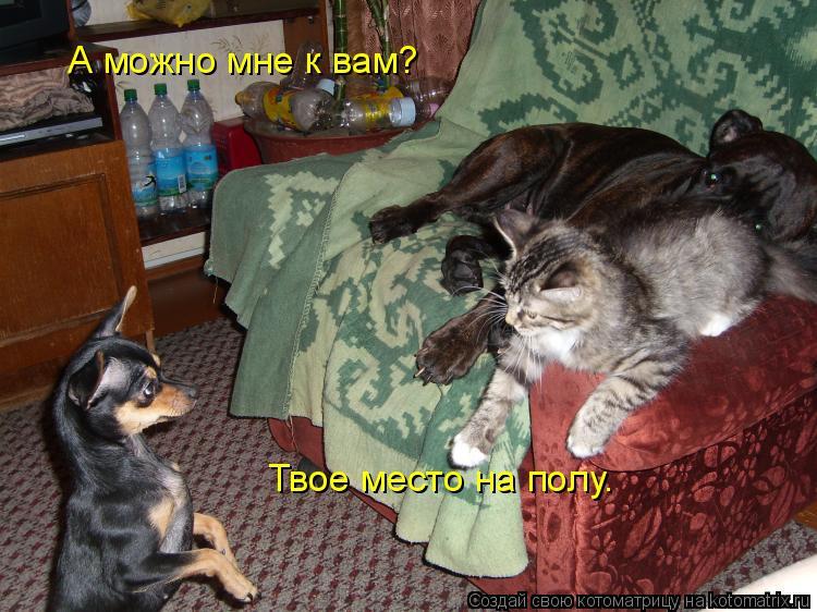 Котоматрица: А можно мне к вам?   Твое место на полу.