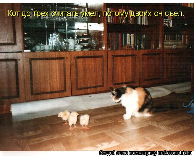 Котоматрица: Кот до трех считать умел, потому двоих он съел.