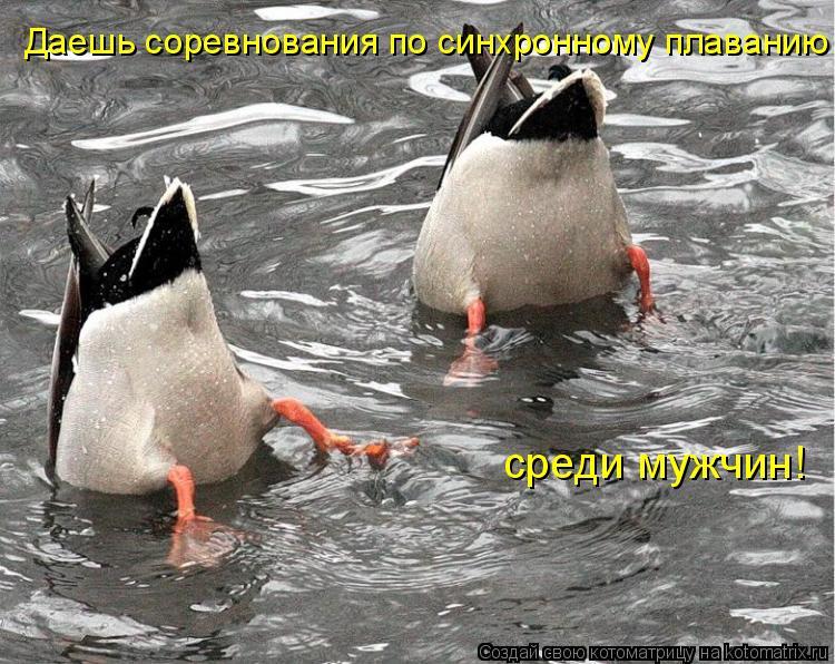 Котоматрица: Даешь соревнования по синхронному плаванию среди мужчин!