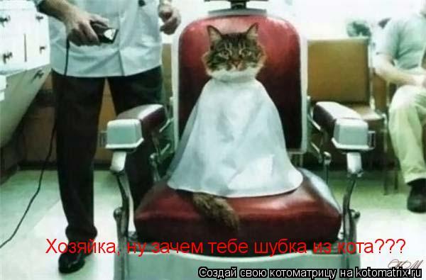 Котоматрица: Хозяйка, ну зачем тебе шубка из кота???