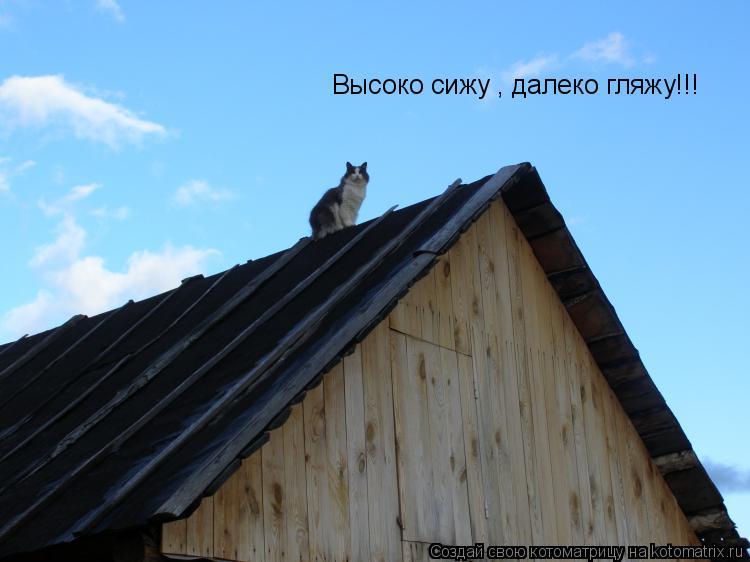 Котоматрица: Высоко сижу , далеко гляжу!!!