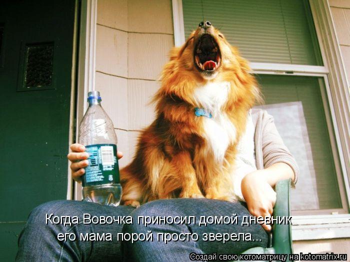 Котоматрица: Когда Вовочка приносил домой дневник его мама порой просто зверела...