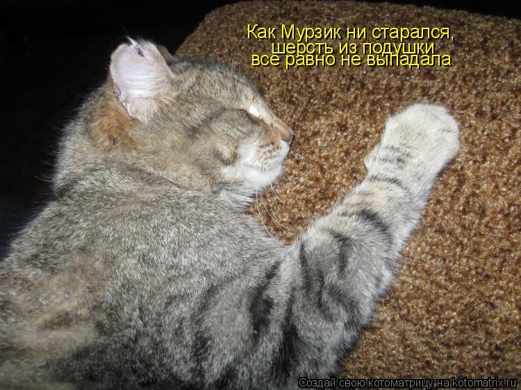 Котоматрица: Как Мурзик ни старался, шерсть из подушки все равно не выпадала