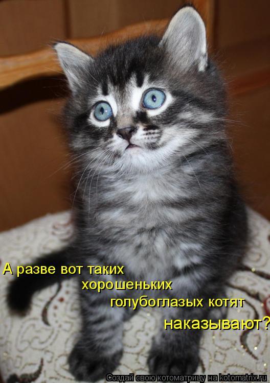 Котоматрица: А разве вот таких хорошеньких голубоглазых котят наказывают?