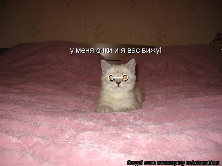 Котоматрица: О _ _ О у меня очки и я вас вижу!