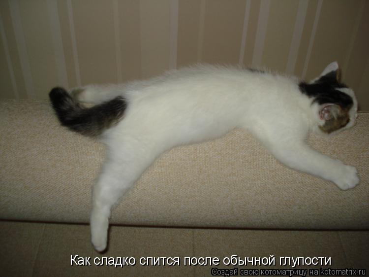 Котоматрица: Как сладко спится после обычной глупости