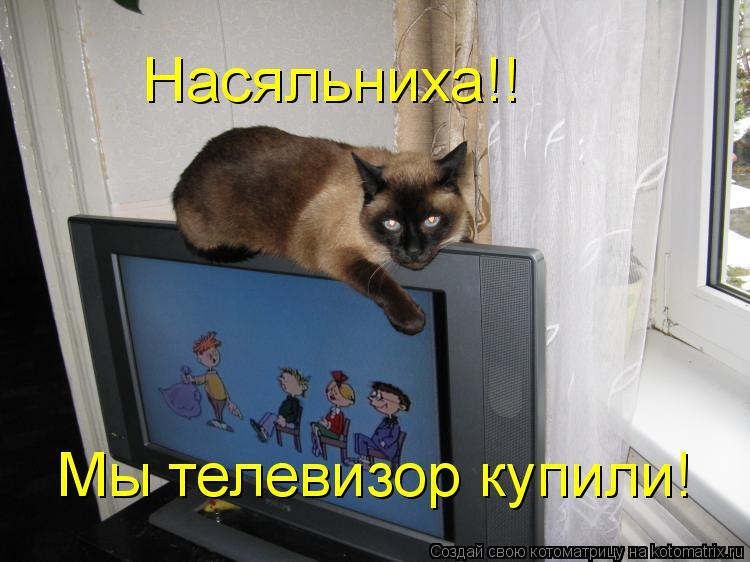 Котоматрица: Насяльниха!! Мы телевизор купили!