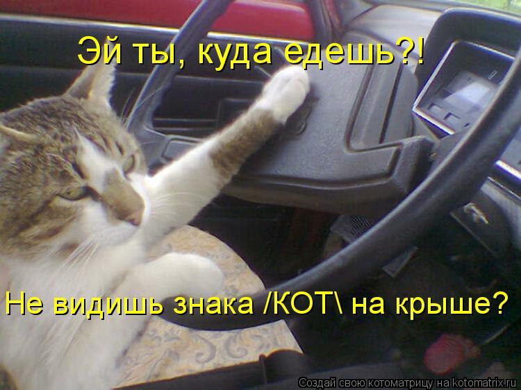 Котоматрица: Эй ты, куда едешь?! Не видишь знака /КОТ на крыше?