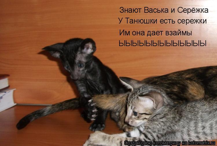 Котоматрица: Знают Васька и Серёжка У Танюшки есть сережки  Им она дает взаймы ЫЫЫЫЫЫЫЫЫЫЫЫЫ