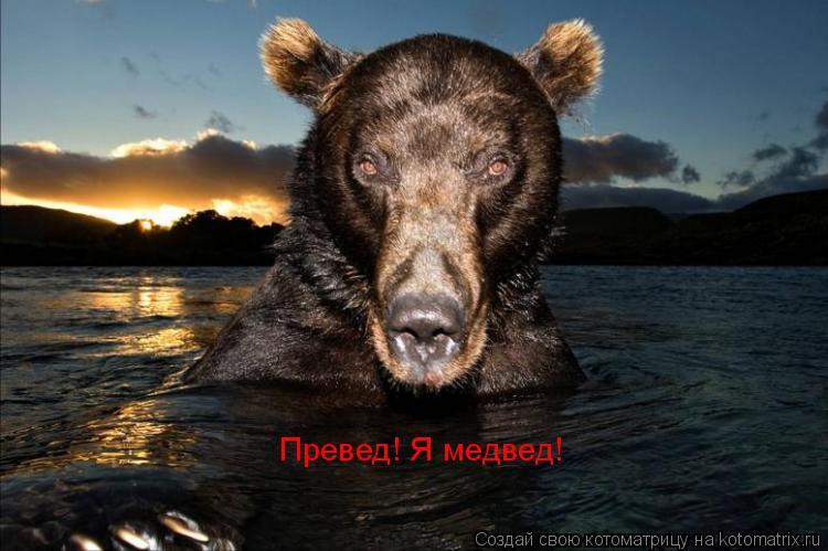 Котоматрица: Превед! Я медвед!