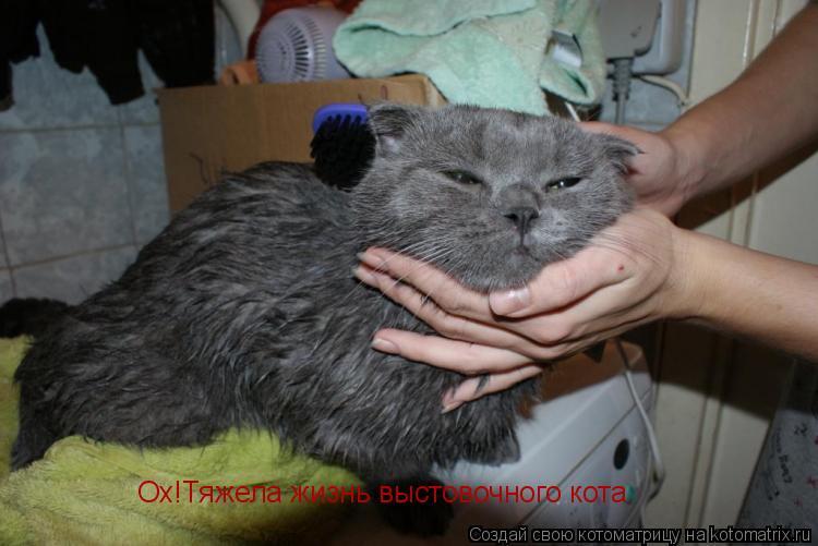 Котоматрица: Ох!Тяжела жизнь выстовочного кота.