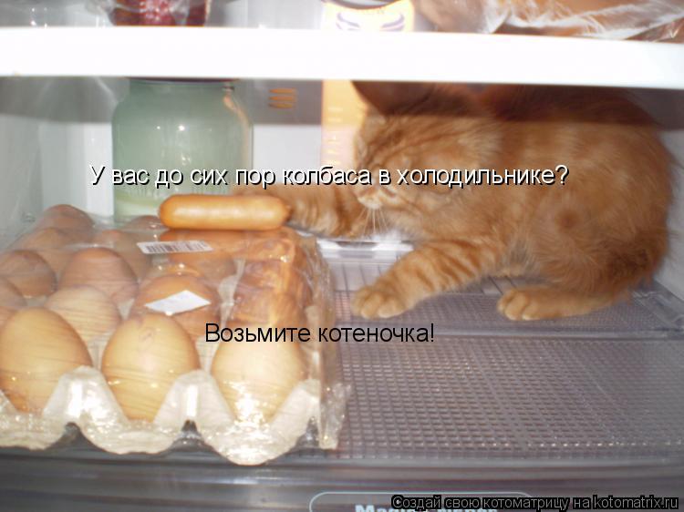 Котоматрица: У вас до сих пор колбаса в холодильнике? Возьмите котеночка!