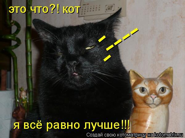 Котоматрица: это что?! кот я всё равно лучше!!! ---- - -
