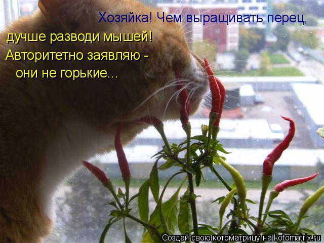 Котоматрица: Хозяйка! Чем выращивать перец, дучше разводи мышей! Авторитетно заявляю - они не горькие...