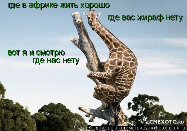 Котоматрица: где в африке жить хорошо где вас жираф нету вот я и смотрю где нас нету