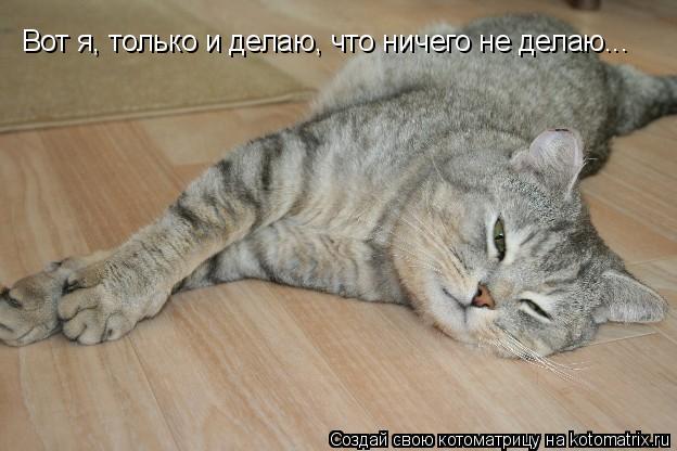 Котоматрица: Вот я, только и делаю, что ничего не делаю...