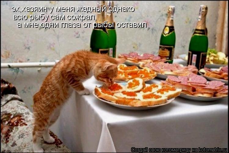 Котоматрица: эх,хазяин у меня жадный однако всю рыбу сам сожрал, а мне одни глаза от рыбы оставил