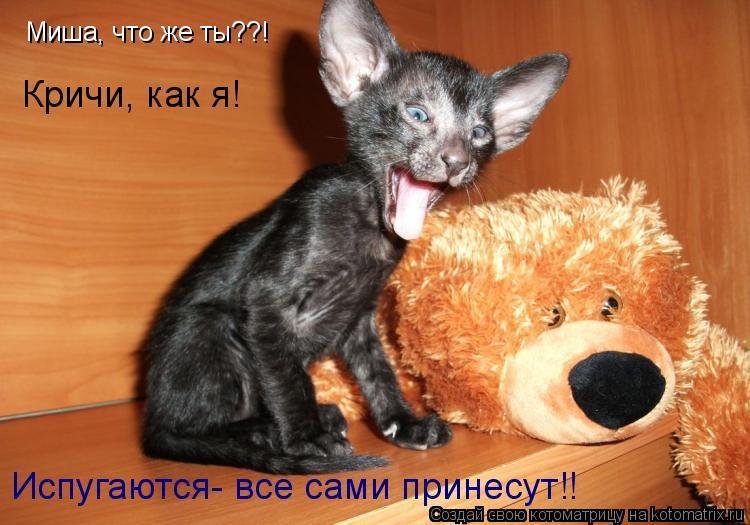 Котоматрица: Миша, что же ты??! Кричи, как я! Испугаются- все сами принесут!!