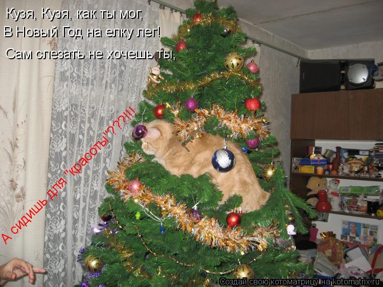"""Котоматрица: Кузя, Кузя, как ты мог, В Новый Год на елку лег! Сам слезать не хочешь ты, А сидишь для """"красоты""""???!!!"""