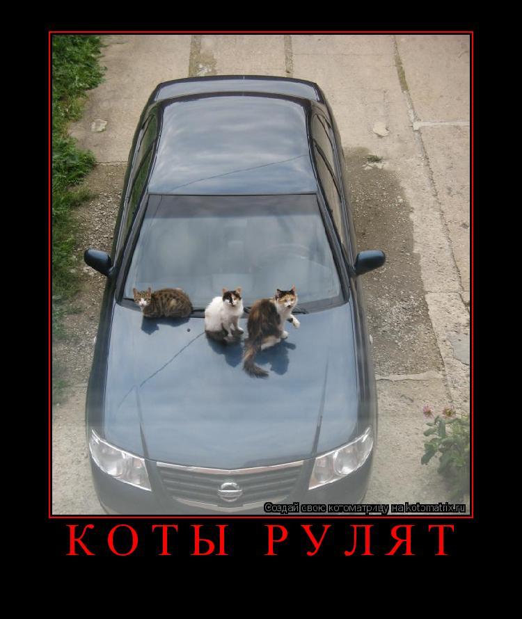 Котоматрица: коты рулят
