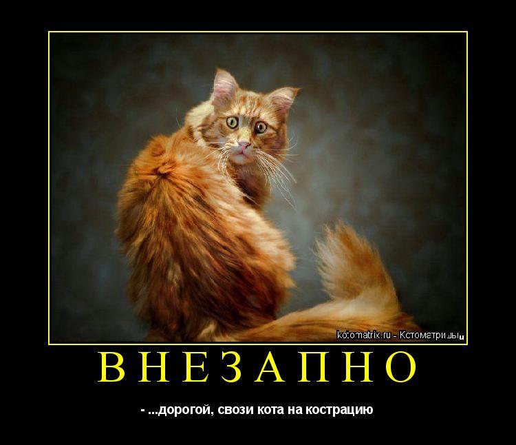 Котоматрица: ВНЕЗАПНО - ...дорогой, свози кота на кострацию