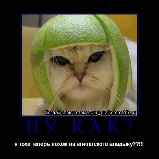 Котоматрица: ну как? я тохе теперь похож на египетского владыку??!!!
