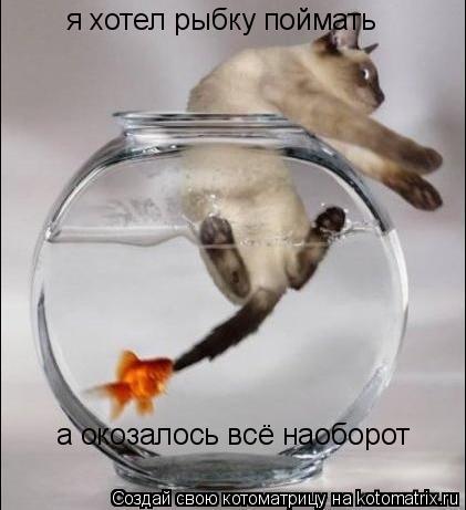 Котоматрица: я хотел рыбку поймать а окозалось всё наоборот