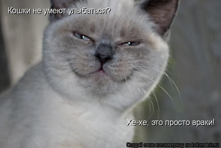 Котоматрица: Кошки не умеют улыбаться? Хе-хе, это просто враки!