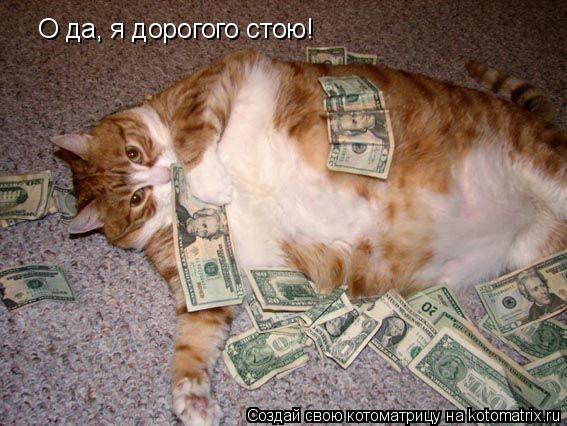 Котоматрица: О да, я дорогого стою!