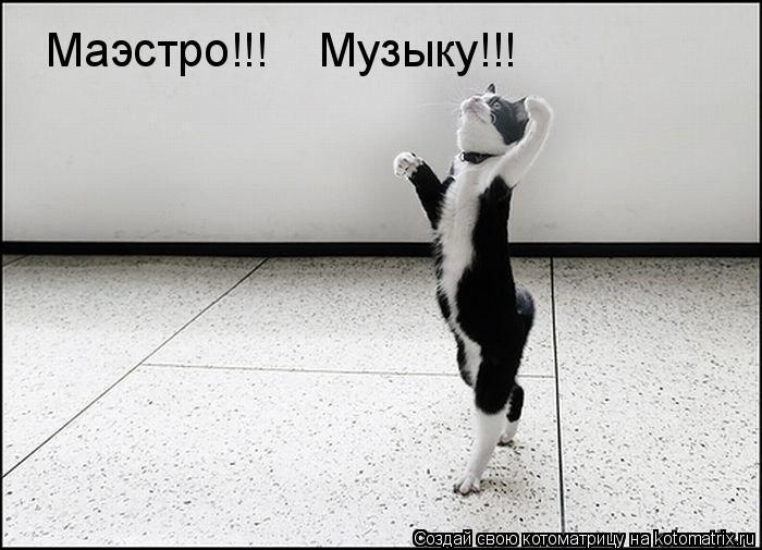 Котоматрица: Маэстро!!!    Музыку!!!