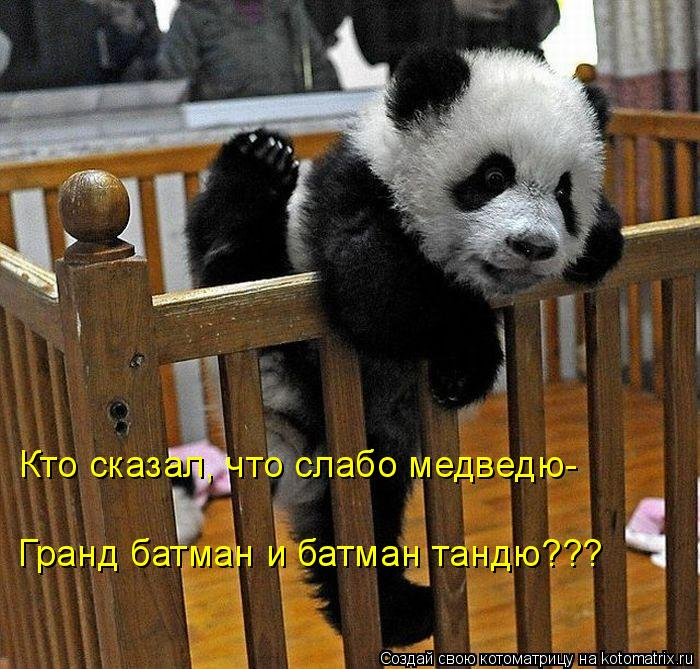Котоматрица: Кто сказал, что слабо медведю-  Гранд батман и батман тандю???