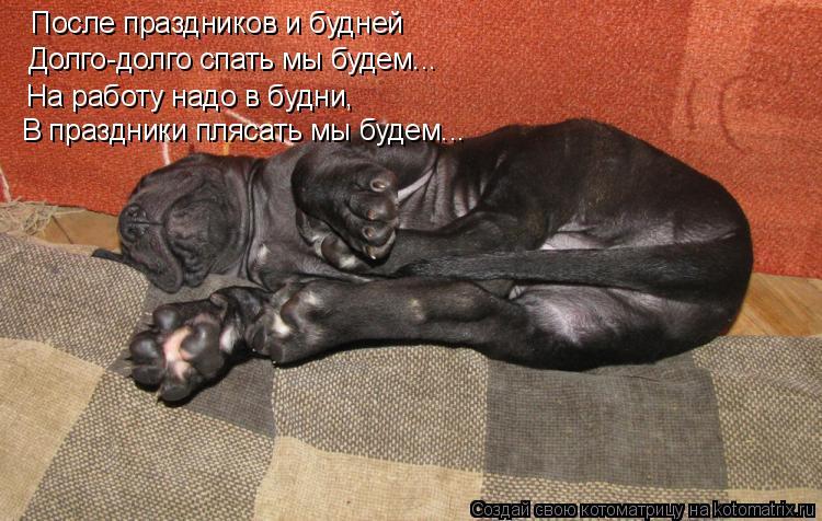 Котоматрица: После праздников и будней Долго-долго спать мы будем... На работу надо в будни, В праздники плясать мы будем...