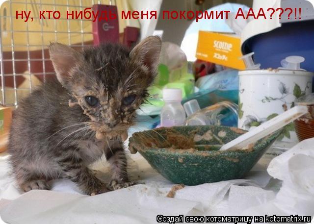 Котоматрица: ну, кто нибудь меня покормит ААА???!!