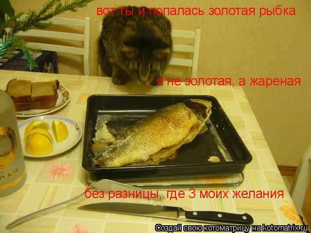 Котоматрица: вот ты и попалась золотая рыбка я не золотая, а жареная без разницы, где 3 моих желания