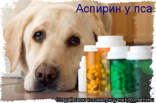 Котоматрица: Аспирин у пса